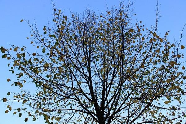 Autumn canopy_Pixabay Dec2018b