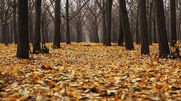 Autumn_Pixabay_Dec2018b