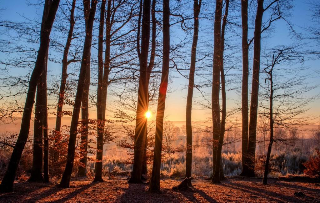 forest_sunset_Pixabay_Feb2019