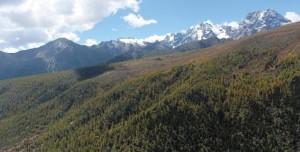 Treeline central Himalayas_30052019b